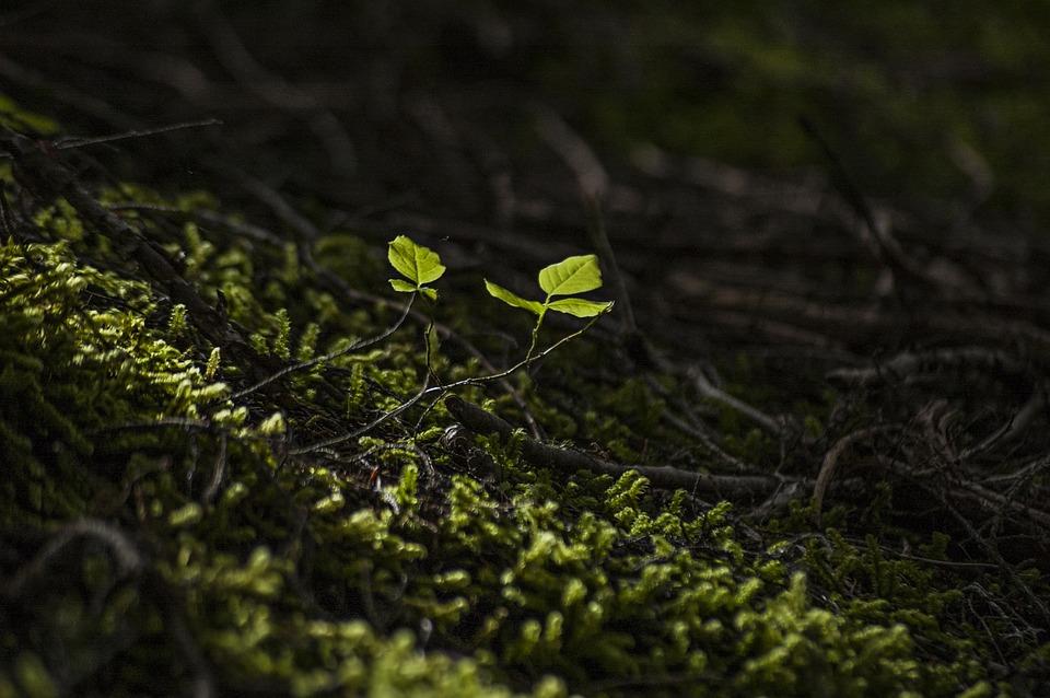 """Conférence """"Les forêts : un acteur clé de la biosphère""""  """